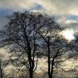 Теплая погода с дождем и мокрым снегом ожидается в Поморье в эти выходные