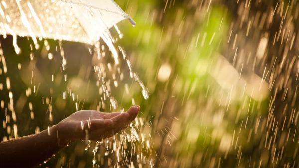 Архангелогородцев ждет летнее тепло с ливнями и грозами