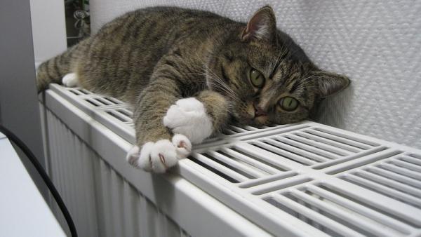 Батареи в домах Архангельска потеплеют на следующей неделе