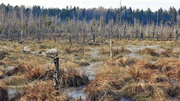 Покорение тремя рыбаками ижемских болот на вездеходе закончилось звонком спасателям