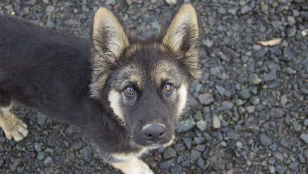 Выбросивший щенка из окна многоэтажки северодвинец приговорен к исправработам