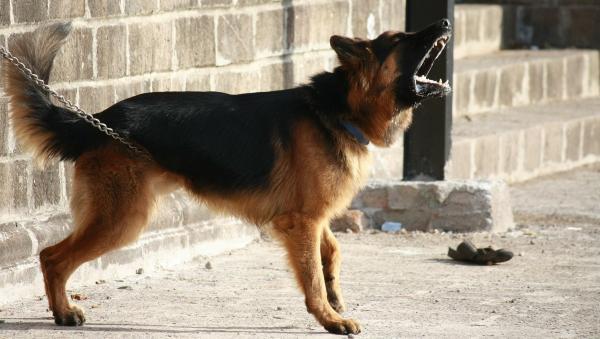 Житель Няндомского района получил 300 часов обязательных работ за убийство собаки